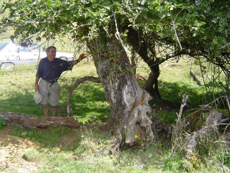 Brad Christensen helping pick Monty's Surprise apples from the mother tree for research.